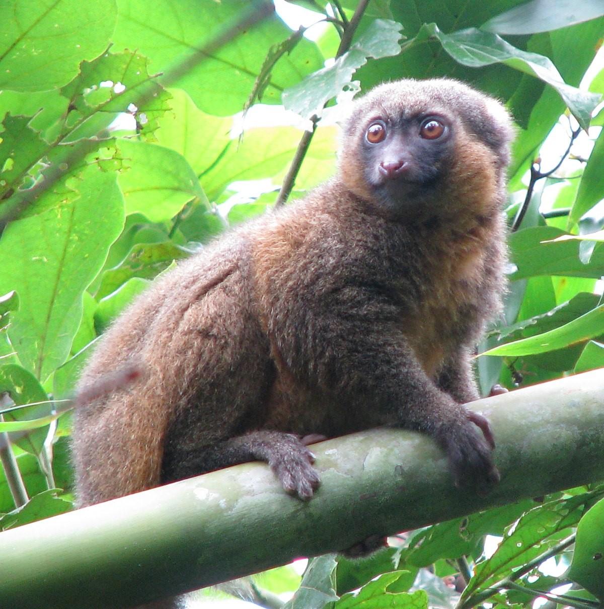 7 جاذبه برتر گردشگری در ماداگاسکار